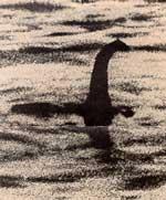 ภาพถ่ายของ  โรเบิร์ต เคนเนท วิลสัน ศัลยแพทย์ชาวอังกฤษ เมื่อ ค.ศ. 1934 ซึ่งมีผู้วิเคราะห์ว่าอาจเป็นแค่หางของนากที่กำลังดำน้ำ[1] ซึ่งรูปนี้ได้รับการเปิดเผยในปี ค.ศ. 1998 จากคริสเตียน สเปอร์ลิง ชายวัย 90 ปี ว่าเป็นหนึ่งในผู้ร่วมสร้างภาพนี้ ที่จริงแล้วเป็นเพียงแค่หุ่นจำลองที่ติดกับเรือดำน้ำเด็กเล่น