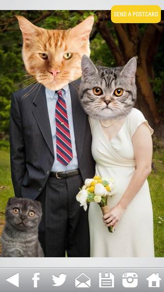 Cat Bomb แอพหน้าแมว